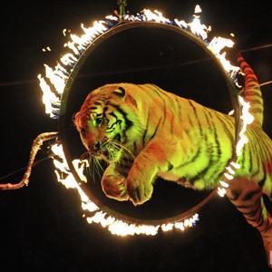Цирки Калтана