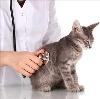 Ветеринарные клиники в Калтане